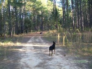 2009 Forestry walk