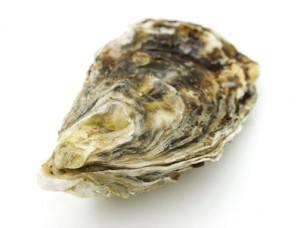 oyster_shell-