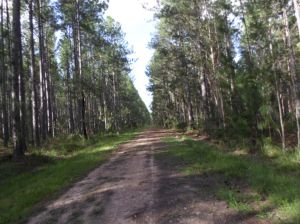 Forestry walking road