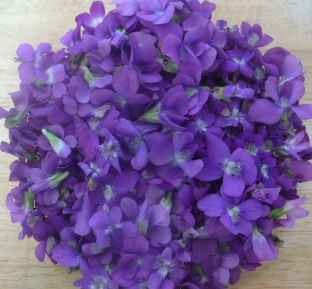 violets no2