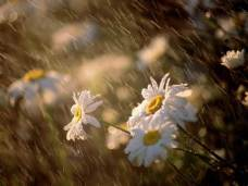 rain-on-flowers