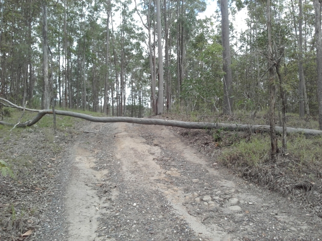 Tree across road, 27 Nov 2017
