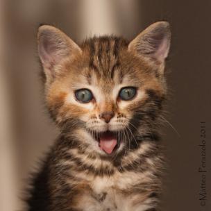 happy kitten