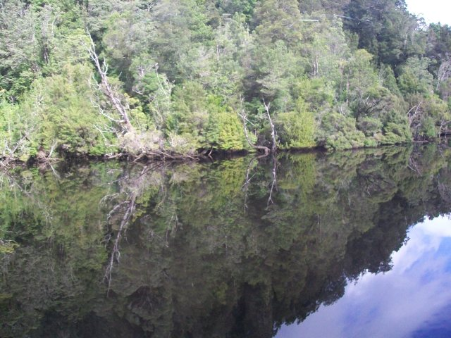 F199 Reflections in Gordon River.