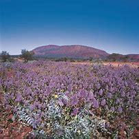 Wildflowers Australia.