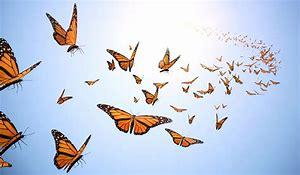 2chasing butterflies