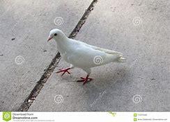BIRD ON PATH.